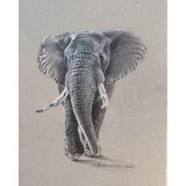 Obraz - ceruza - Slon - Ján Radvanský