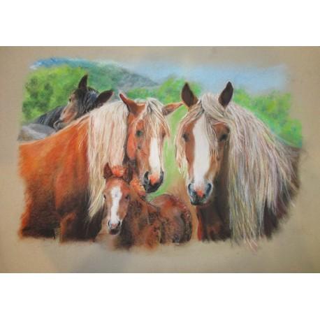 Obraz - Suchý pastel - Tri hnedé kone - MVDr. Jozef Jordan